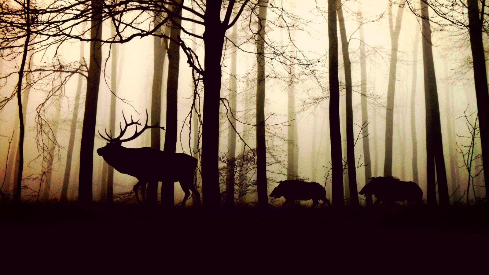 Ambiance Forêt Au Coureur des Bois